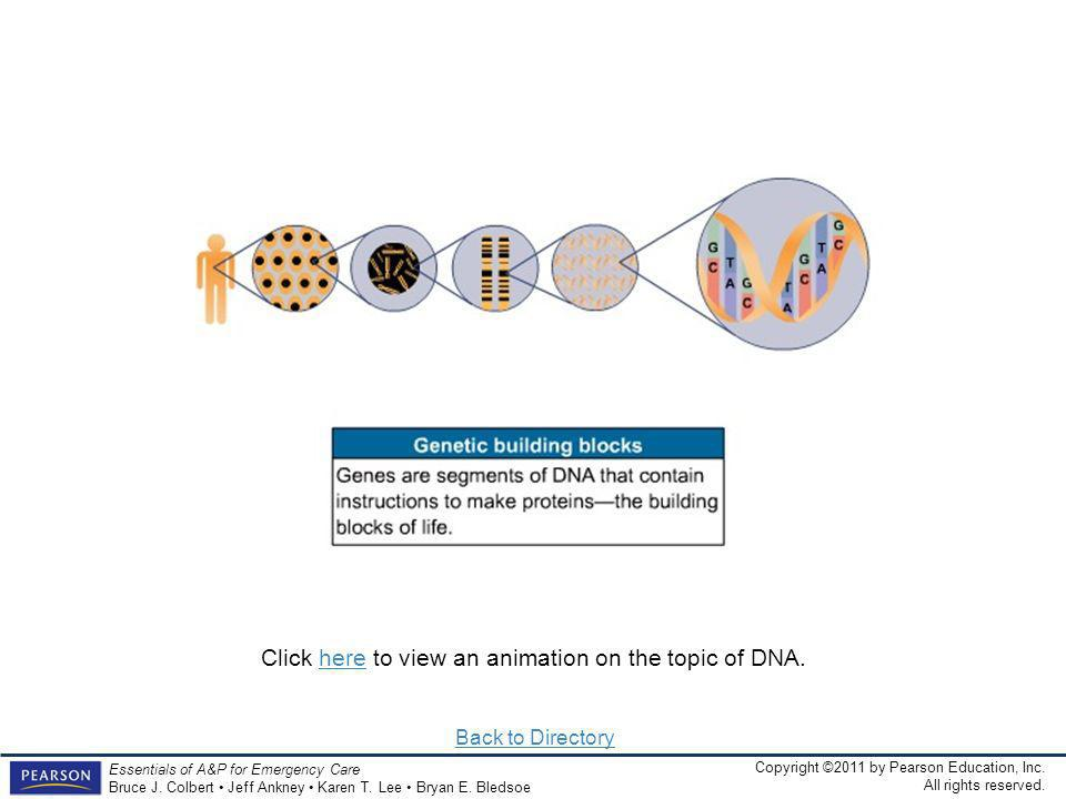 Click here to view an animation on the topic of DNA.