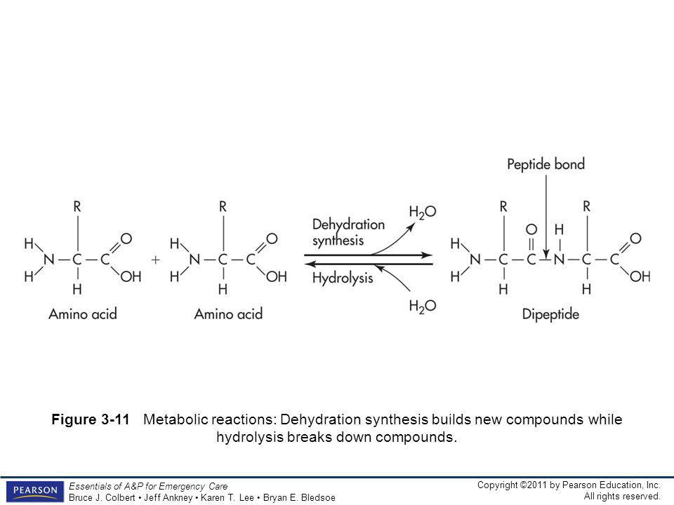 Figure 3-11 Metabolic reactions: Dehydration synthesis builds new compounds while hydrolysis breaks down compounds.
