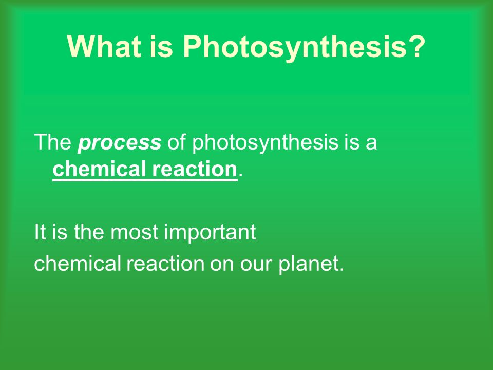 What is Photosynthesis