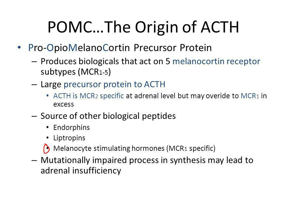 POMC…The Origin of ACTH