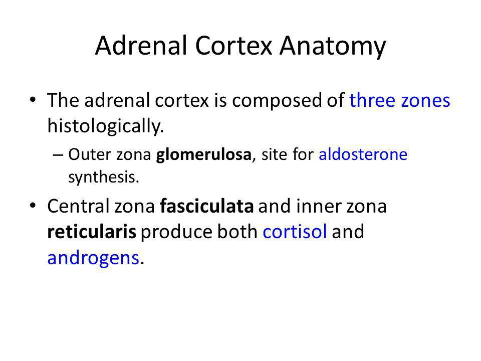 Adrenal Cortex Anatomy