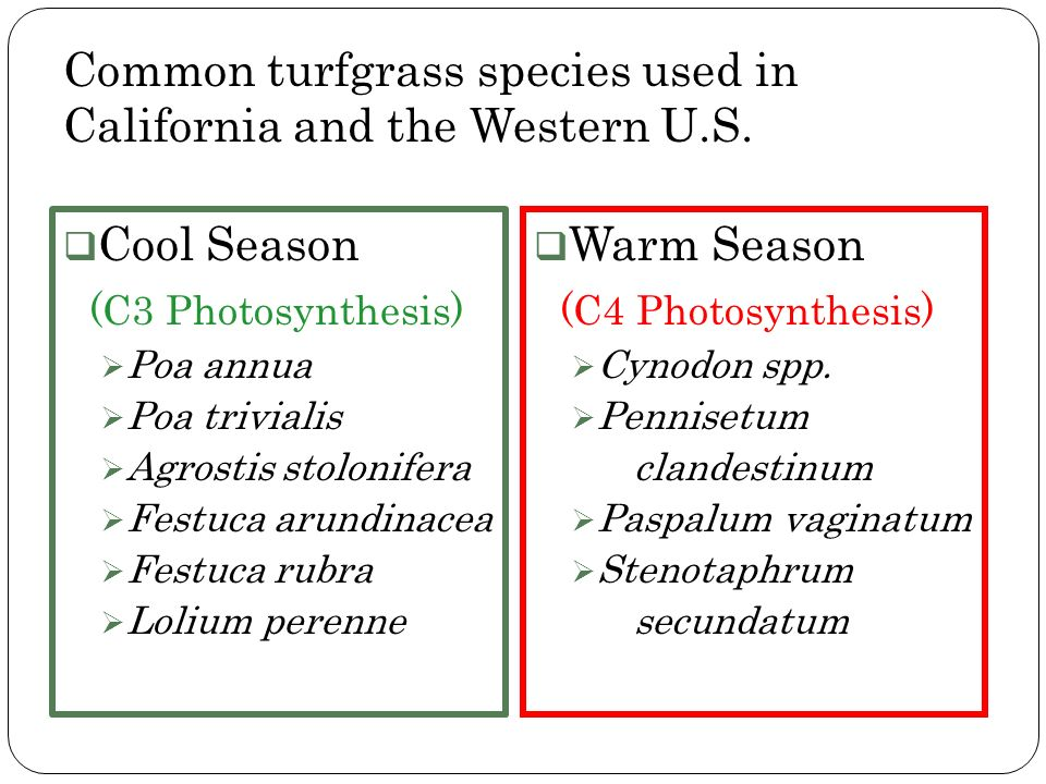 Common turfgrass species used in California and the Western U.S.