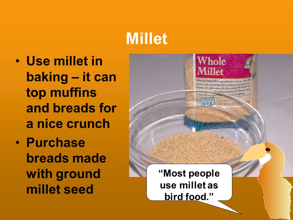 Most people use millet as bird food.