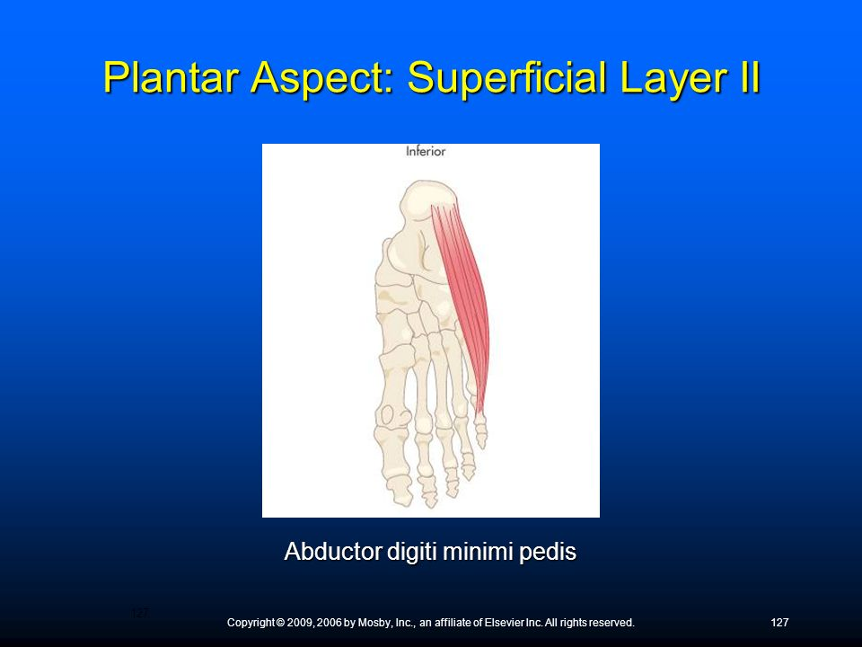 Plantar Aspect: Superficial Layer II