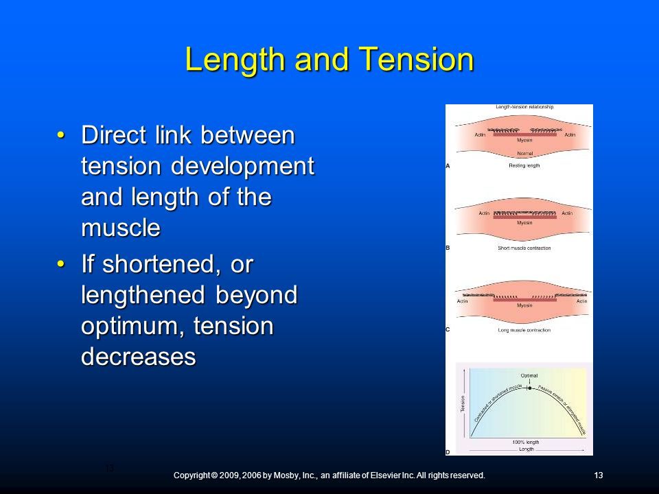 Length and Tension Direct link between tension development and length of the muscle. If shortened, or lengthened beyond optimum, tension decreases.