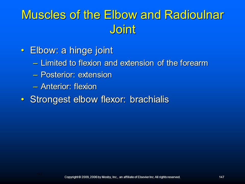 Muscles of the Elbow and Radioulnar Joint