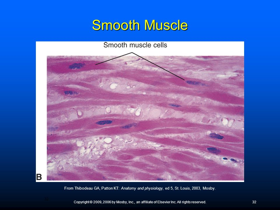 Smooth Muscle ● Visceral smooth muscle usually has a rhythmic self-excitation, or self-rhythm, that spreads across the entire tissue.