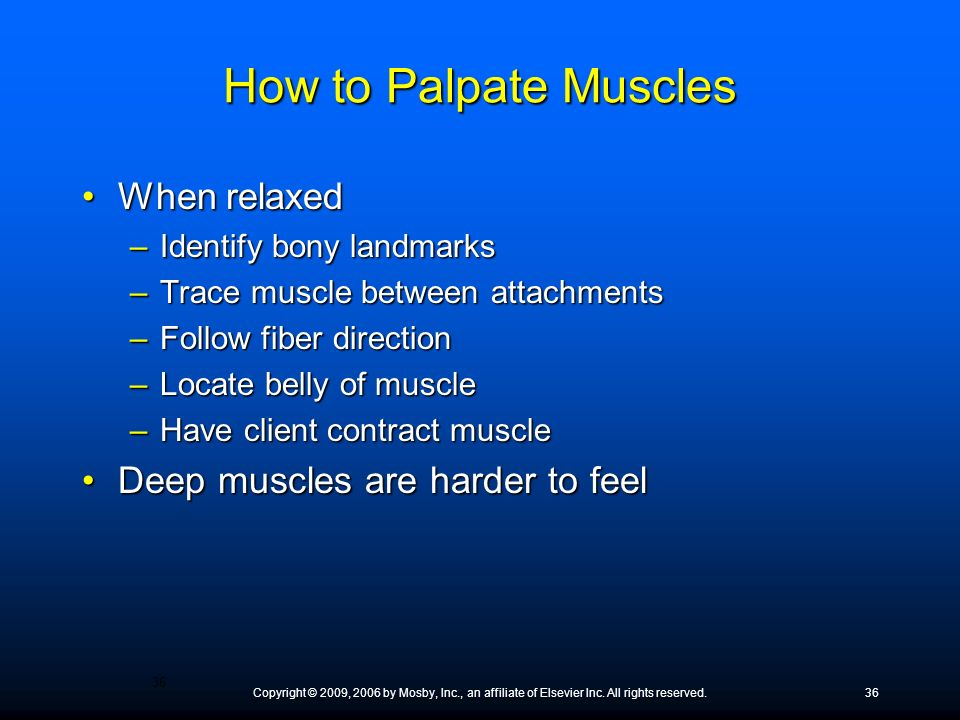 How to Palpate Muscles When relaxed Deep muscles are harder to feel