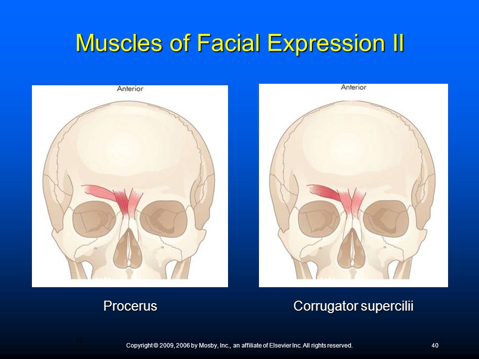 Muscles of Facial Expression II