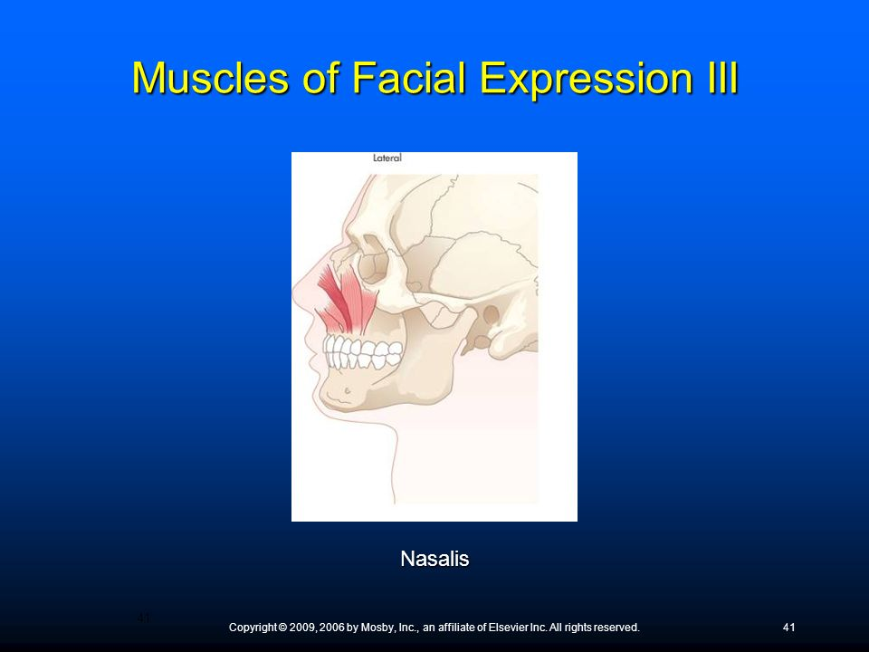 Muscles of Facial Expression III