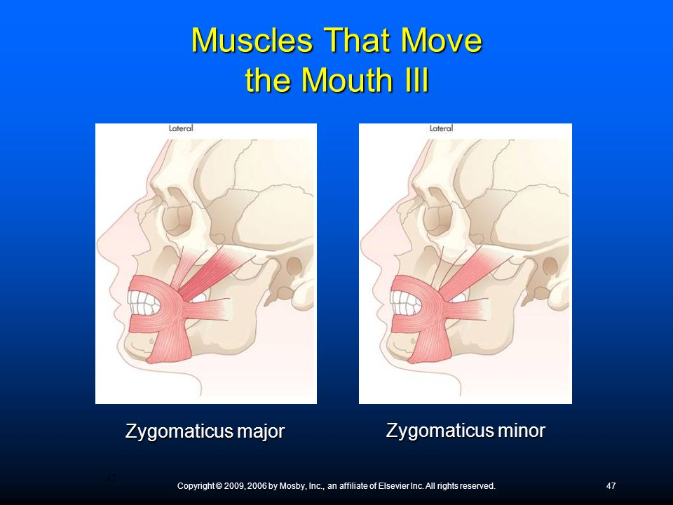 Muscles That Move the Mouth III