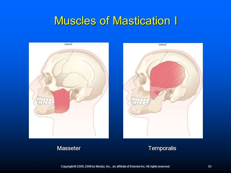 Muscles of Mastication I