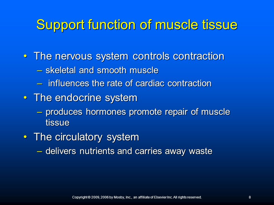 Support function of muscle tissue