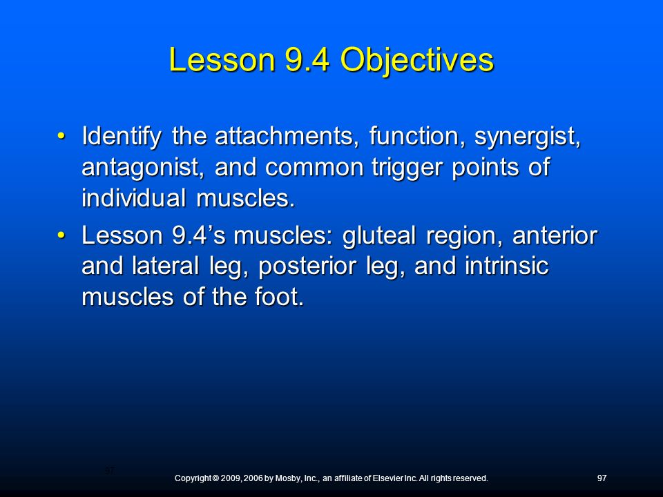 Lesson 9.4 Objectives Identify the attachments, function, synergist, antagonist, and common trigger points of individual muscles.