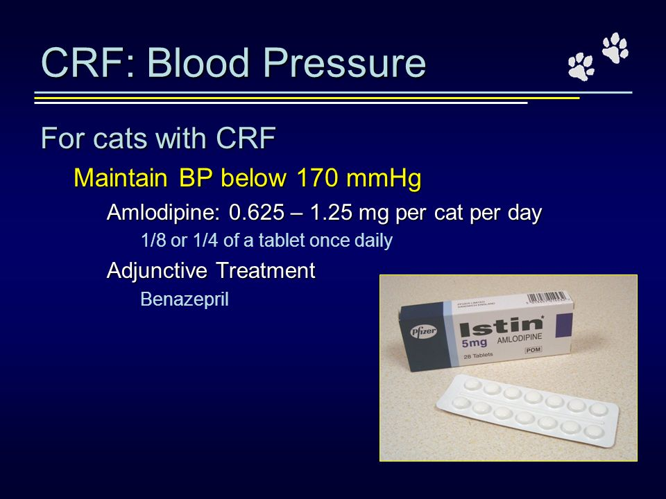 CRF: Blood Pressure For cats with CRF Maintain BP below 170 mmHg