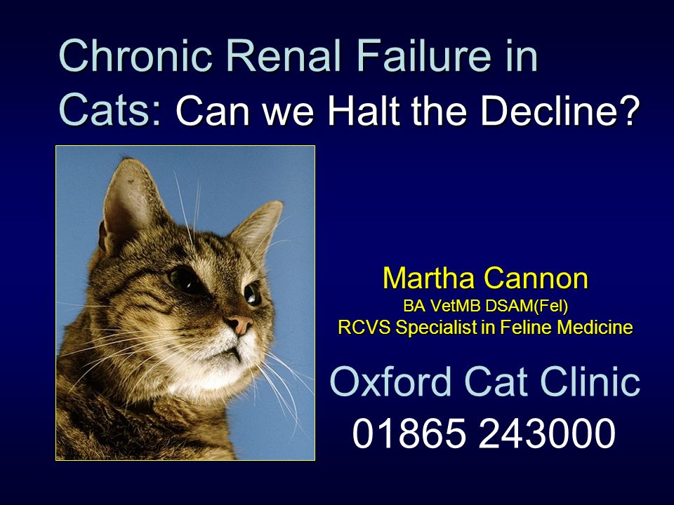 Chronic Renal Failure in Cats: Can we Halt the Decline