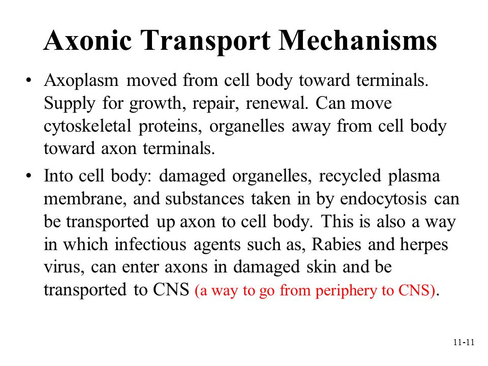 Axonic Transport Mechanisms