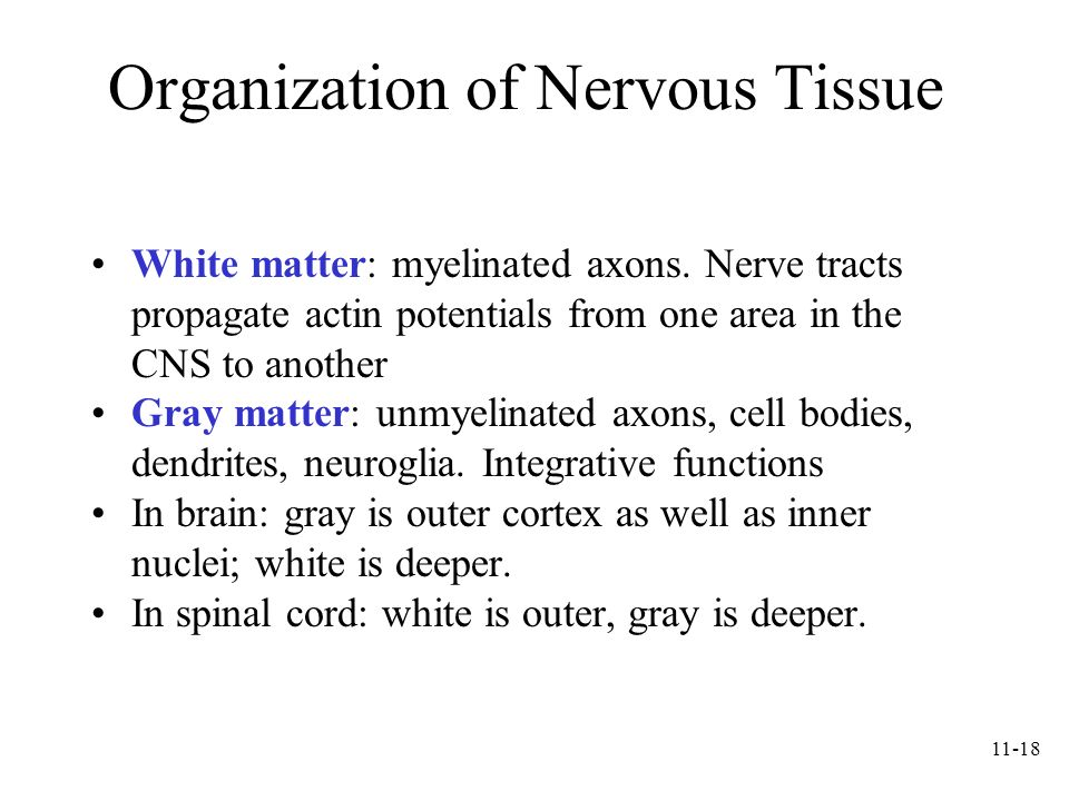 Organization of Nervous Tissue