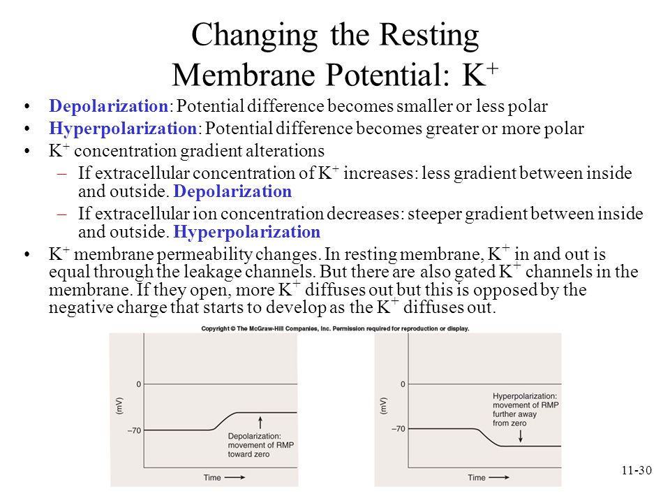 Changing the Resting Membrane Potential: K+