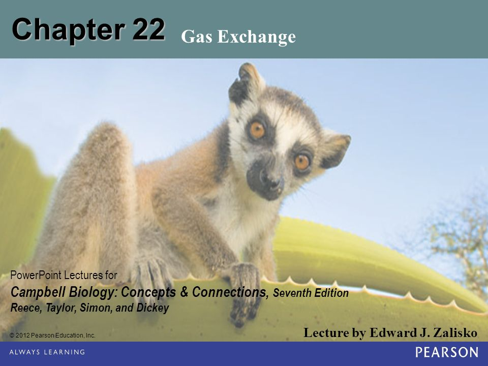 Chapter 22 Gas Exchange