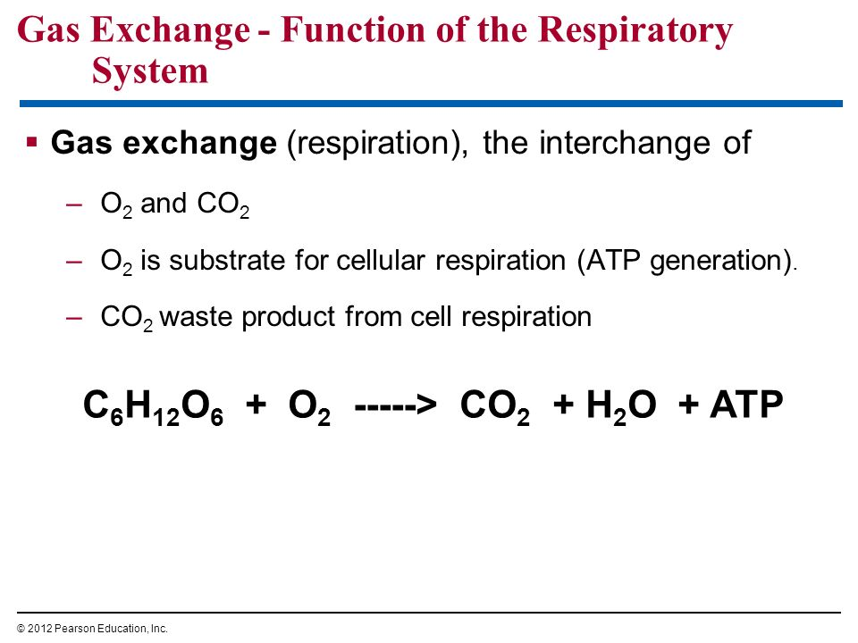 Gas Exchange - Function of the Respiratory System