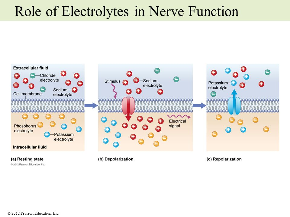 Role of Electrolytes in Nerve Function