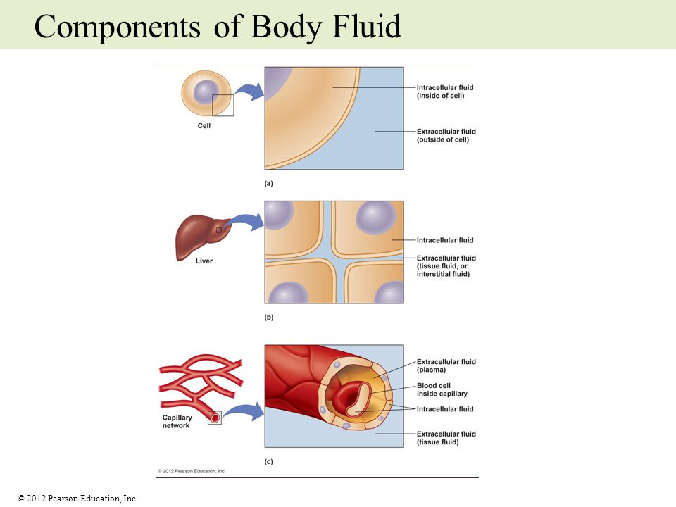Components of Body Fluid