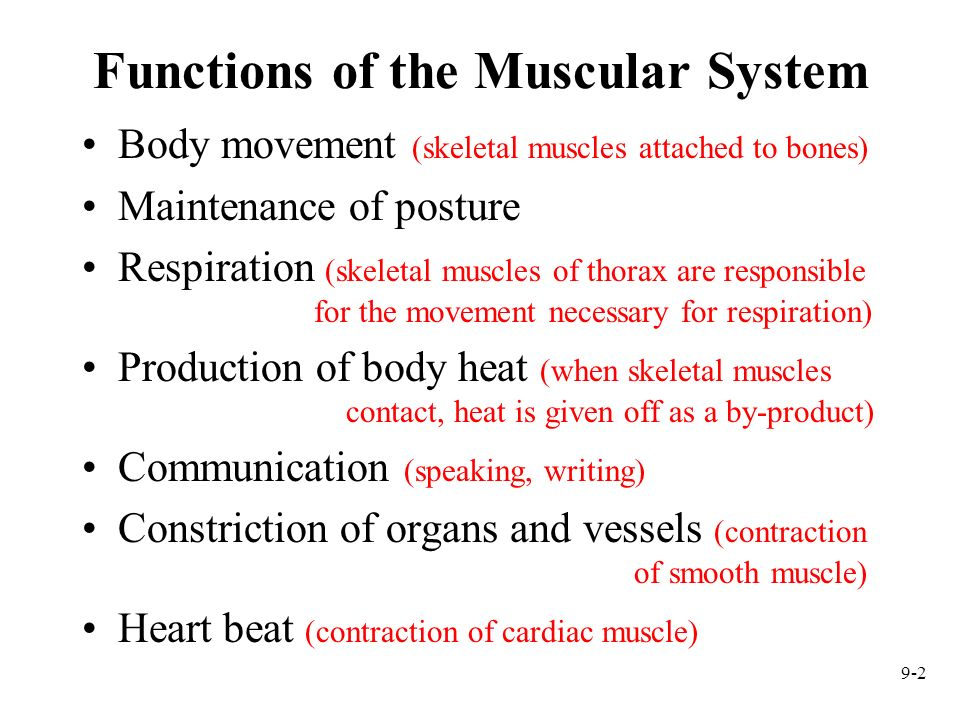 Muscular System Histology And Physiology Ppt Video Online Download