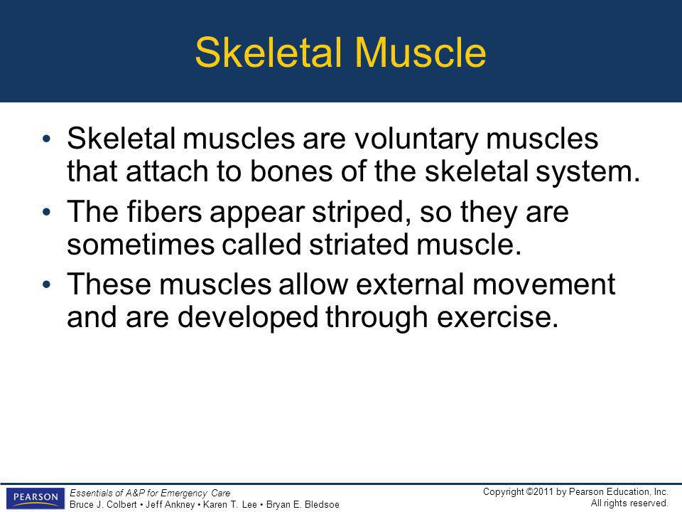 Skeletal Muscle Skeletal muscles are voluntary muscles that attach to bones of the skeletal system.