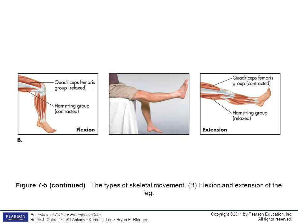 Figure 7-5 (continued) The types of skeletal movement