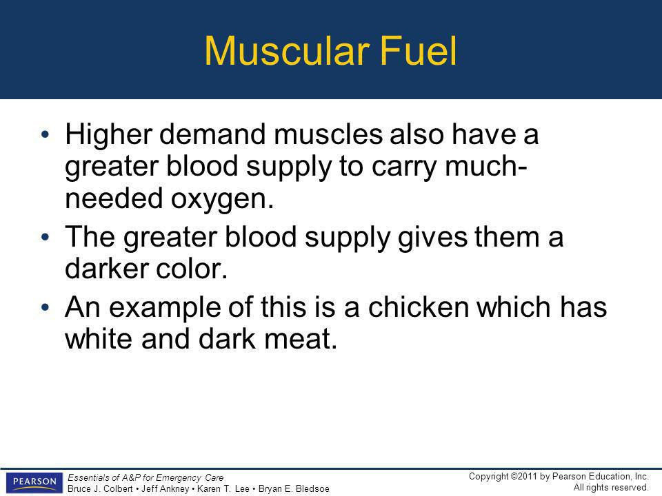Muscular Fuel Higher demand muscles also have a greater blood supply to carry much-needed oxygen.