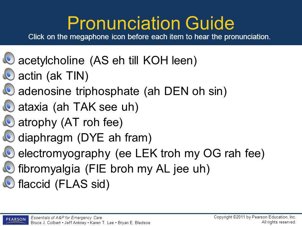 Pronunciation Guide acetylcholine (AS eh till KOH leen) actin (ak TIN)