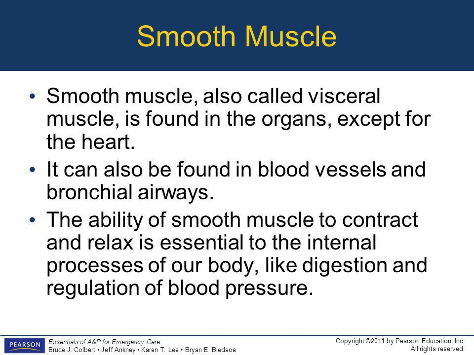 Smooth Muscle Smooth muscle, also called visceral muscle, is found in the organs, except for the heart.