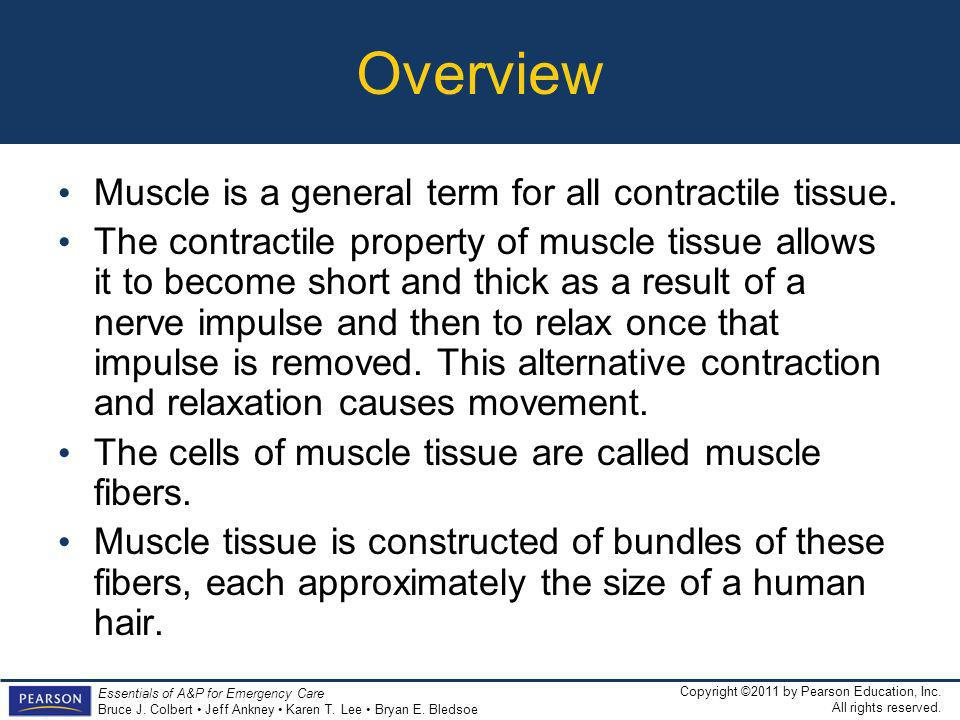 Overview Muscle is a general term for all contractile tissue.