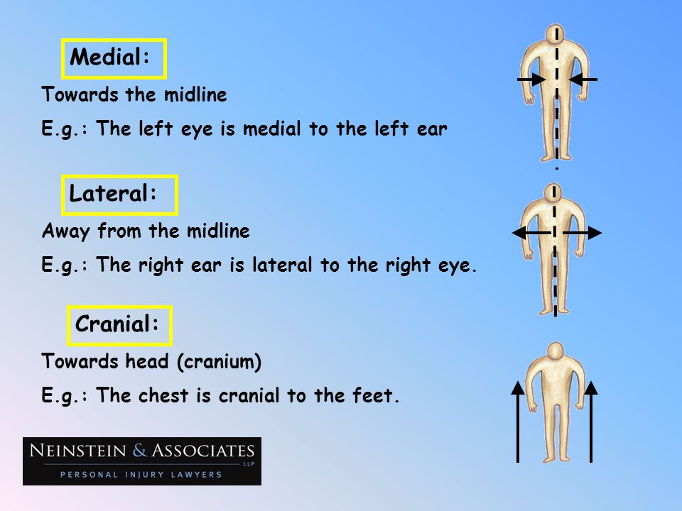 Medial: Lateral: Cranial: Towards the midline
