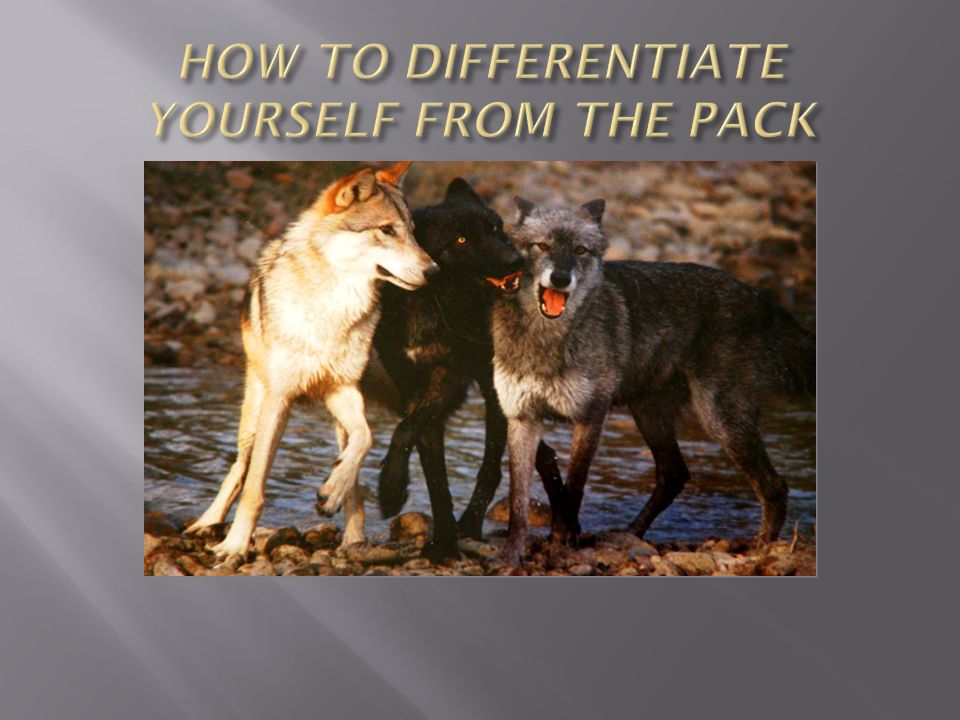 HOW TO DIFFERENTIATE YOURSELF FROM THE PACK
