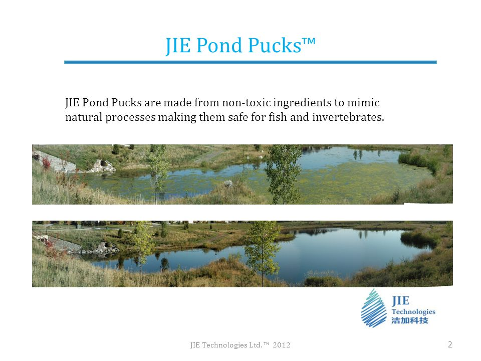 JIE Pond Pucks™ JIE Pond Pucks are made from non-toxic ingredients to mimic natural processes making them safe for fish and invertebrates.