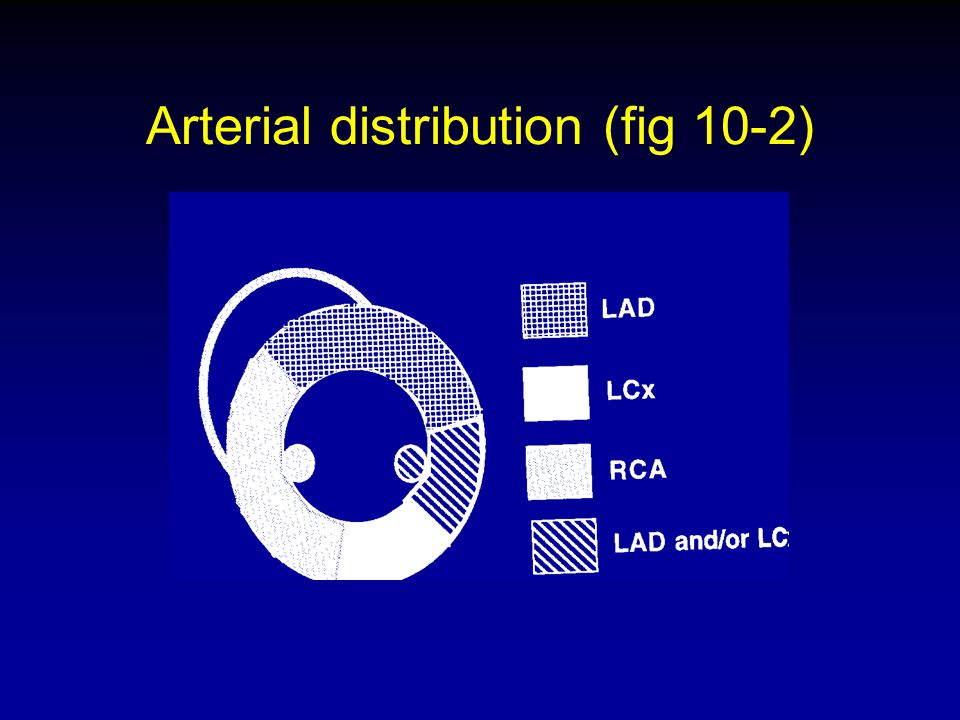 Arterial distribution (fig 10-2)
