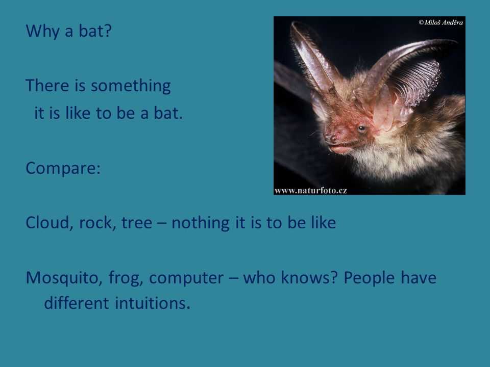 Why a bat. There is something it is like to be a bat
