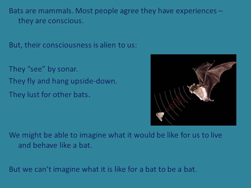 Bats are mammals. Most people agree they have experiences – they are conscious.
