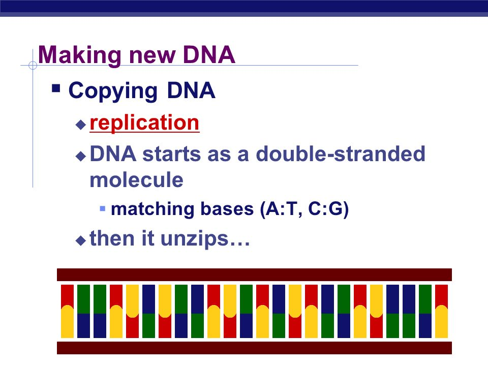 Making new DNA Copying DNA replication