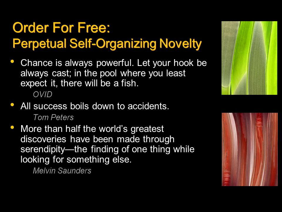 Order For Free: Perpetual Self-Organizing Novelty