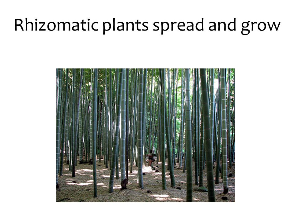 Rhizomatic plants spread and grow