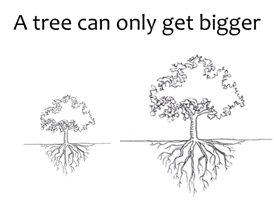 A tree can only get bigger