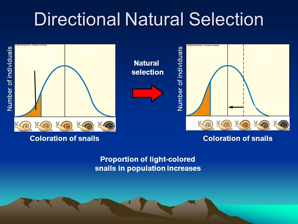 Directional Natural Selection