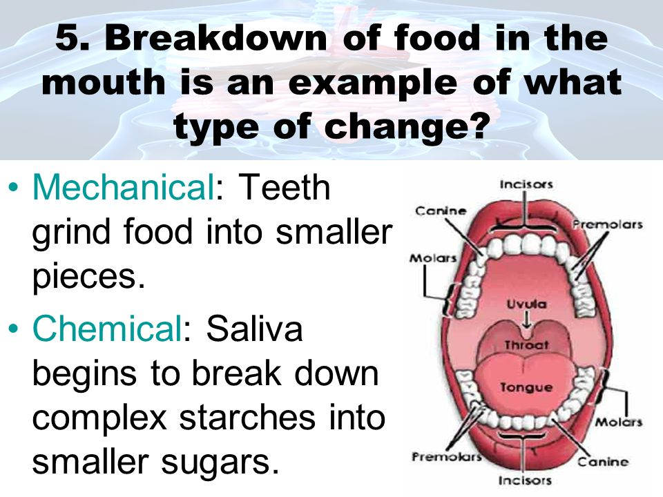 5. Breakdown of food in the mouth is an example of what type of change