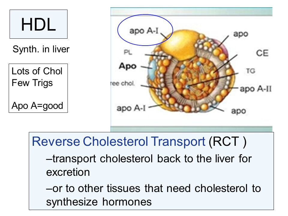 HDL Reverse Cholesterol Transport (RCT )