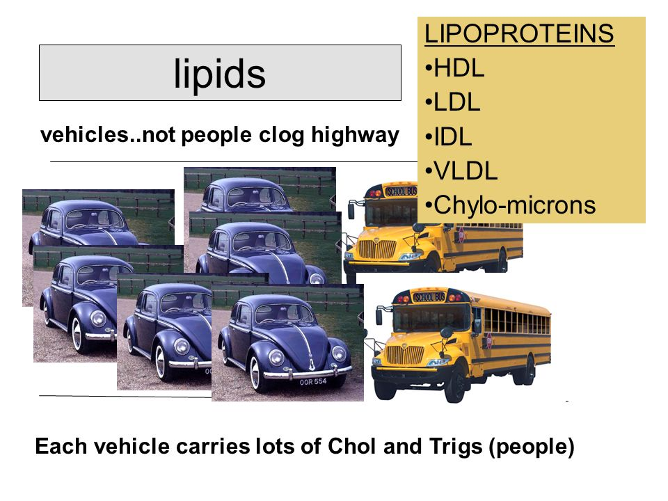 lipids LIPOPROTEINS HDL LDL IDL VLDL Chylo-microns