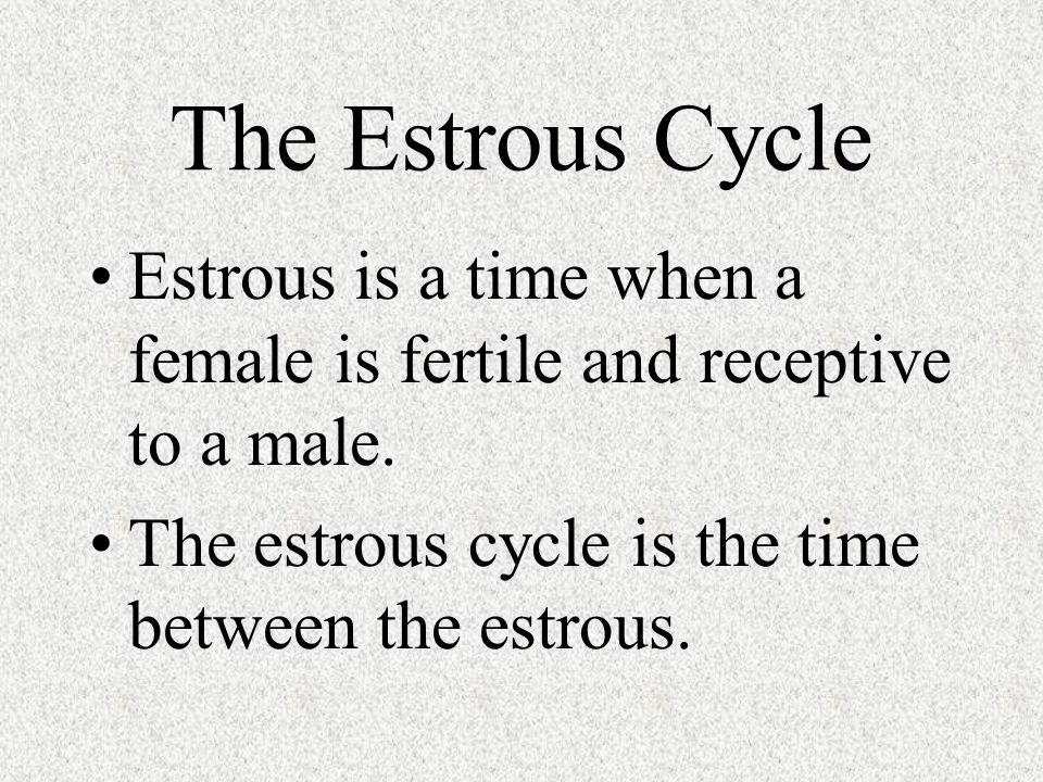The Estrous Cycle Estrous is a time when a female is fertile and receptive to a male.