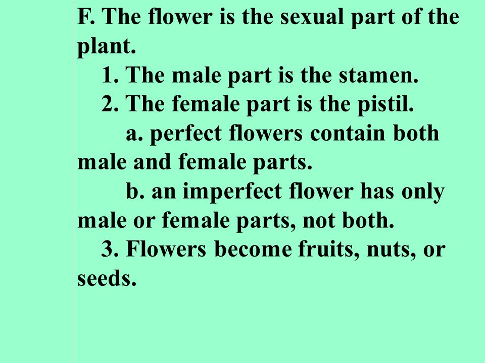 F. The flower is the sexual part of the plant.